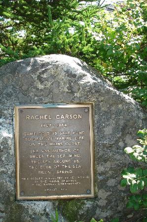 Bradley Inn: Rachel Carson