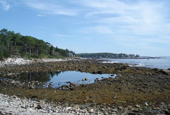 Bradley Inn: Rachel Carson's salt pond