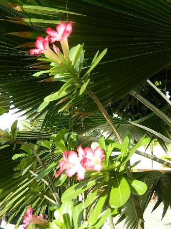 The Catamaran Hotel: Beautiful flowers