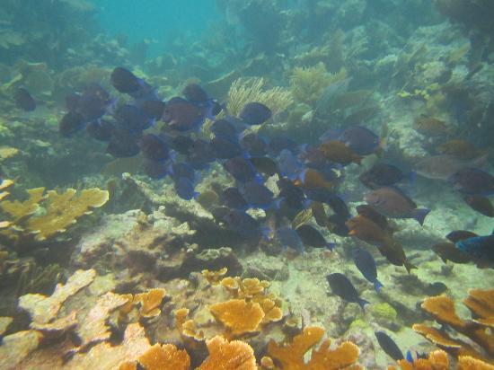 Captain Slate's SCUBA Adventures: school of blue fish