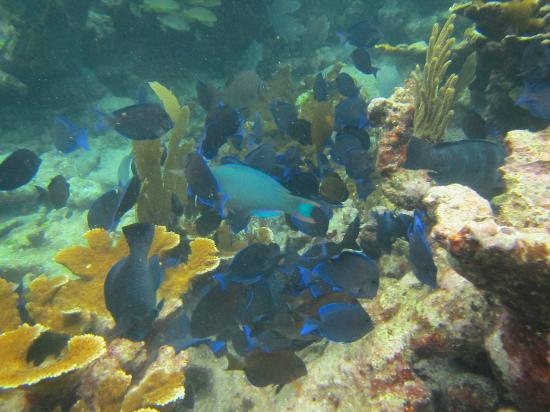 Captain Slate's SCUBA Adventures: so colorful