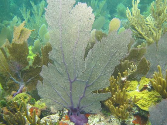 Captain Slate's SCUBA Adventures: Purple coral