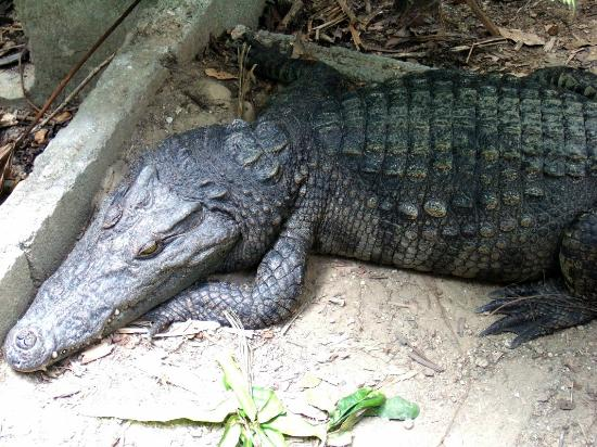 Catfish Farm: Crocky is not bothered about anything