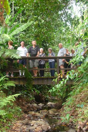 Small Group Cairns City Tour With Optional Green Island Cruise