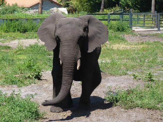 Zoo Bassin D'Arcachon (La Teste-de-Buch, France): Hours, Address ...