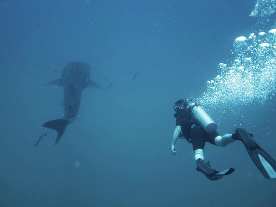 Live & Let Dive : Happy customer Jamie Cook with a Whale Shark at Chumphon Pinnacle