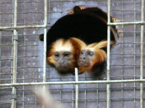Antwerp Zoo (Dierentuin): Singe