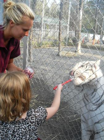 Cat Tales Zoological Park: anna feeding zeus