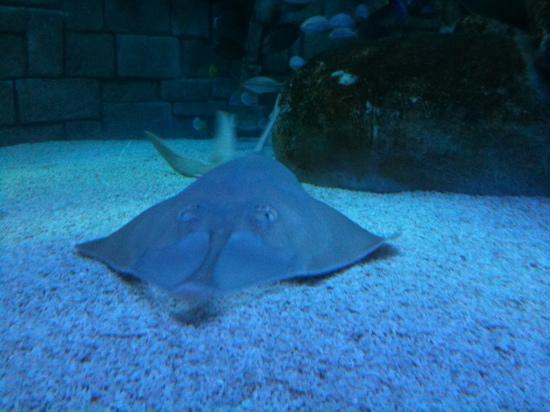 Lido di Jesolo Sea Life Aquarium : il nostro eroe...