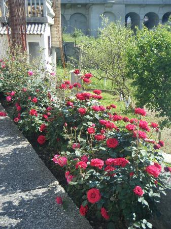 Pansion Aldi Mostar: The rose garden