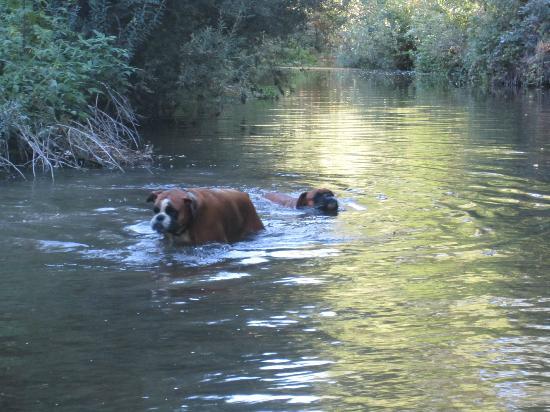 Agriturismo Sant'Erasmo: Torrente vicino all'agriturismo dove i cani possono rinfrescarsi