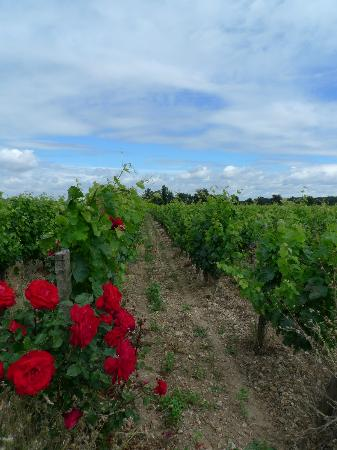 La Grande Maison d'Arthenay : Surrounding vineyards
