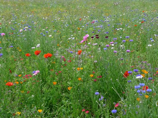 La Grande Maison d'Arthenay : Wildflower meadows
