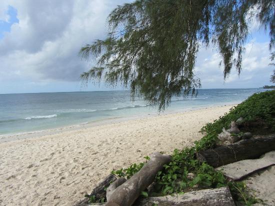 Kinondo Kwetu: beach