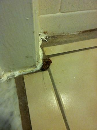 Super 8 Williamsburg/Colonial Area : cockroach in the bathroom