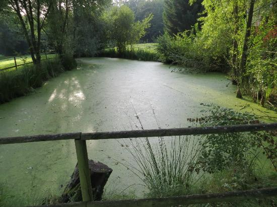 Logis Domaine de l'Arbrelle : vista dello stagno in giardino