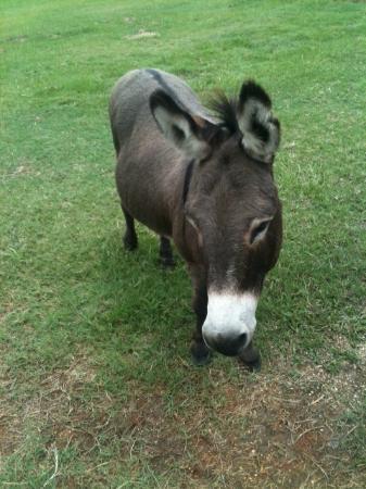 Bush, لويزيانا: Buddy! 