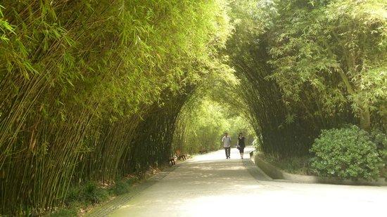 Giant Panda Breeding Research Base (Xiongmao Jidi): The Panda Park