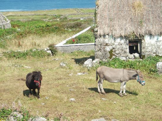 Kilmurvey Beach: asino e pony lungo la strada