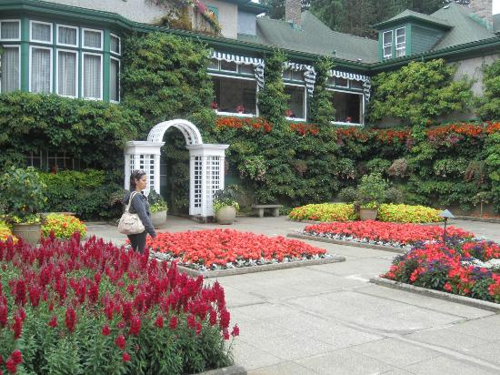 Butchart Gardens: Cafetería rodeada de flores