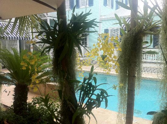 Marquesa Hotel: Piscina