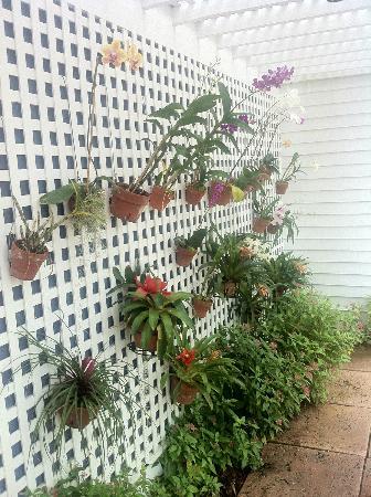 Marquesa Hotel: Orchidee