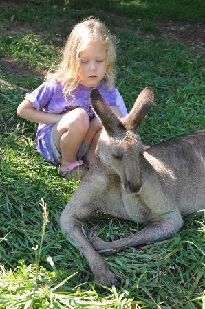 Kentucky Down Under Adventure Zoo: Kangaroo experience