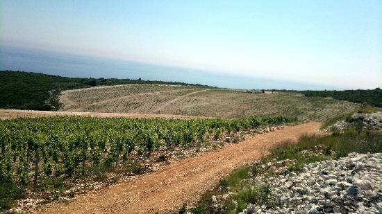 Zure: New vineyard