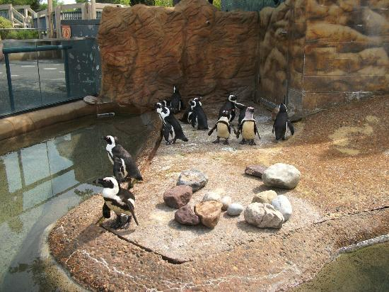 Adventure Aquarium: It was hot, felt a bit bad for the penguins:(