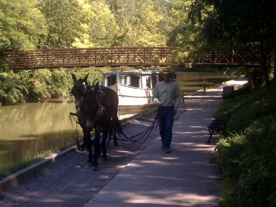 Providence Metropark & the Isaac Ludwig Mill : Mule Team pulling the boat.