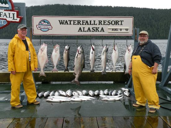 Waterfall Resort Alaska: Our first days catch including a 33.5 pound Chinook