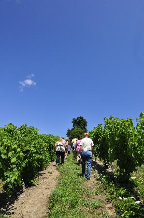 Fulkerson Winery: Take a Vineyard Tour - by reservation only, Saturday/Sunday June 1 - Sept 2