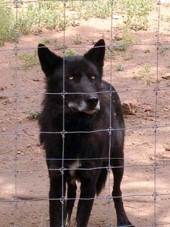 Colorado Wolf and Wildlife Center: Na'vi