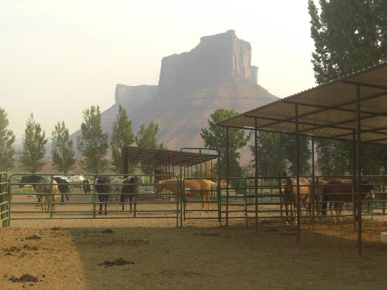 Sorrel River Ranch Resort: Horses