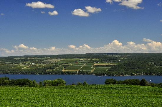 Fulkerson Winery: If this isn't paradise, we don't know what is! Overlooking our vineyards and Seneca Lake