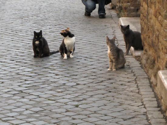 "Largo di Torre Argentina : ""Feral"" cats at Area Sacra"