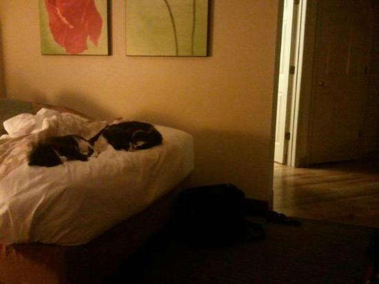 La Quinta Inn & Suites Norfolk Airport: Our babies enjoying the hotel beds ( trust me there pickier than me)