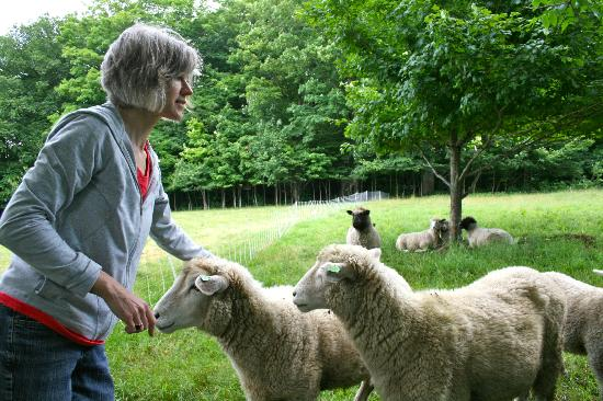 Vermont Grand View Farm and Bed & Breakfast: Kim and her Romney ewes