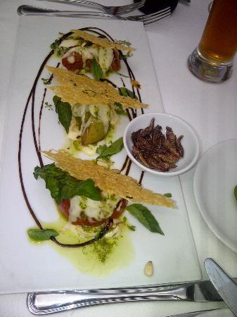 Dulce Patria en Las Alcobas: Salad with chapulines (grass hoppers)