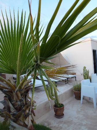 Riad Dar-K : Terrassse