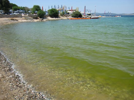 Club Resort Atlantis: Badespaß im grünem Nass