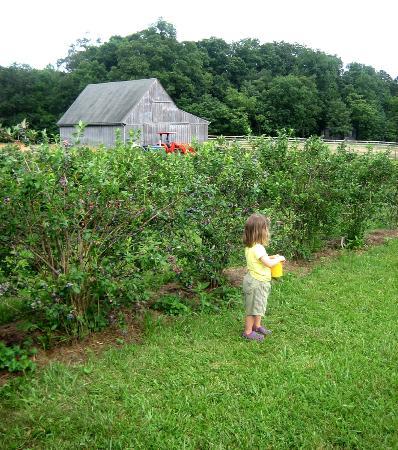 Eagletree Farm Blueberries