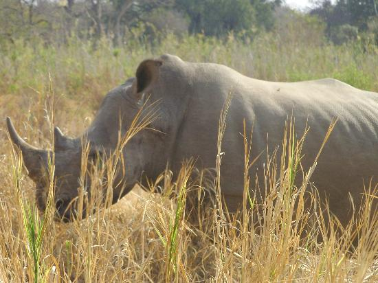 شيسومو سافاري كامب: Rhino on a game drive