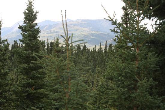 Alaskan Spruce Cabins 사진