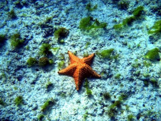 Noord, Aruba: Boca Catalina