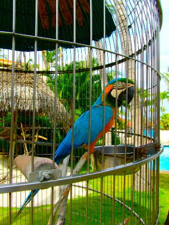 Hyatt Regency Aruba Resort And Casino Birds Kept On The Grounds