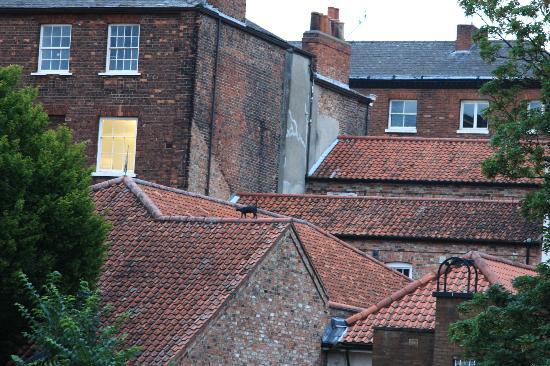 York Cat Trail: sur les toits, vue du pont.