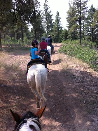 Diamond Hitch Stables: On the trail