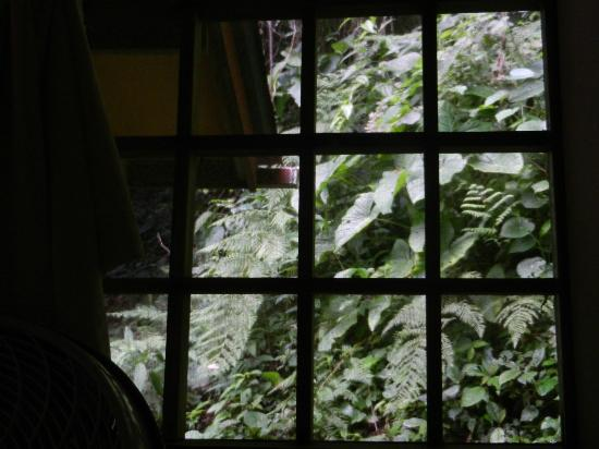 Samasati Retreat & Rainforest Sanctuary: view from window
