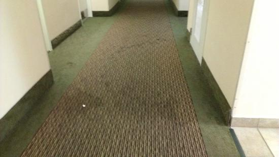 Holiday Inn Miami West - Hialeah Gardens: Hallway